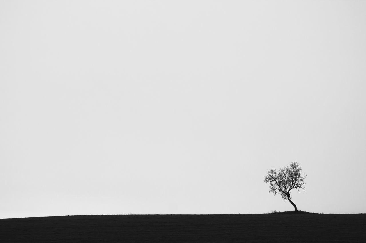 Alone Beauty In Nature Black And White Blackandwhite Clear Sky Day Growth Lone Lone Tree Nature No People Outdoors Scenics Single Tree Sky Small Tree Smalltree Tranquility Tree Trough