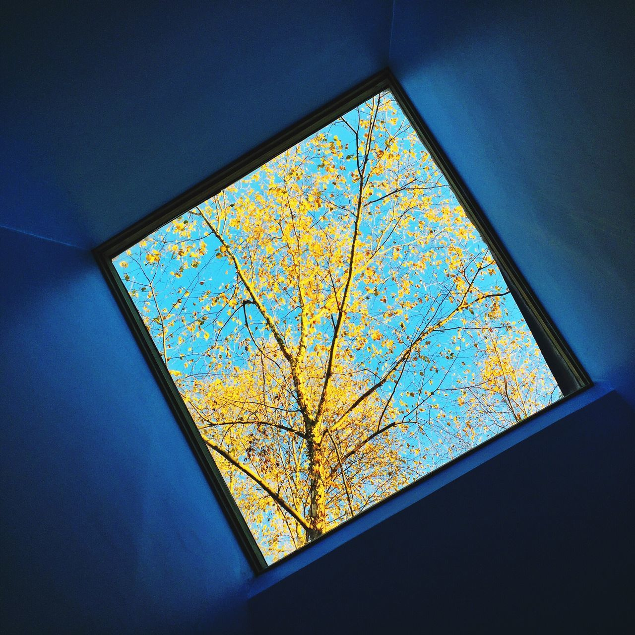 Window Skylight Indoors  Day Low Angle View Tree Nature No People Exploring Style Beauty In Nature Autumn EyeEm Best Shots Minimalism Blue Yellow Leaves Lookingup Fine Art Blue Sky Architectural Detail Architectural Feature