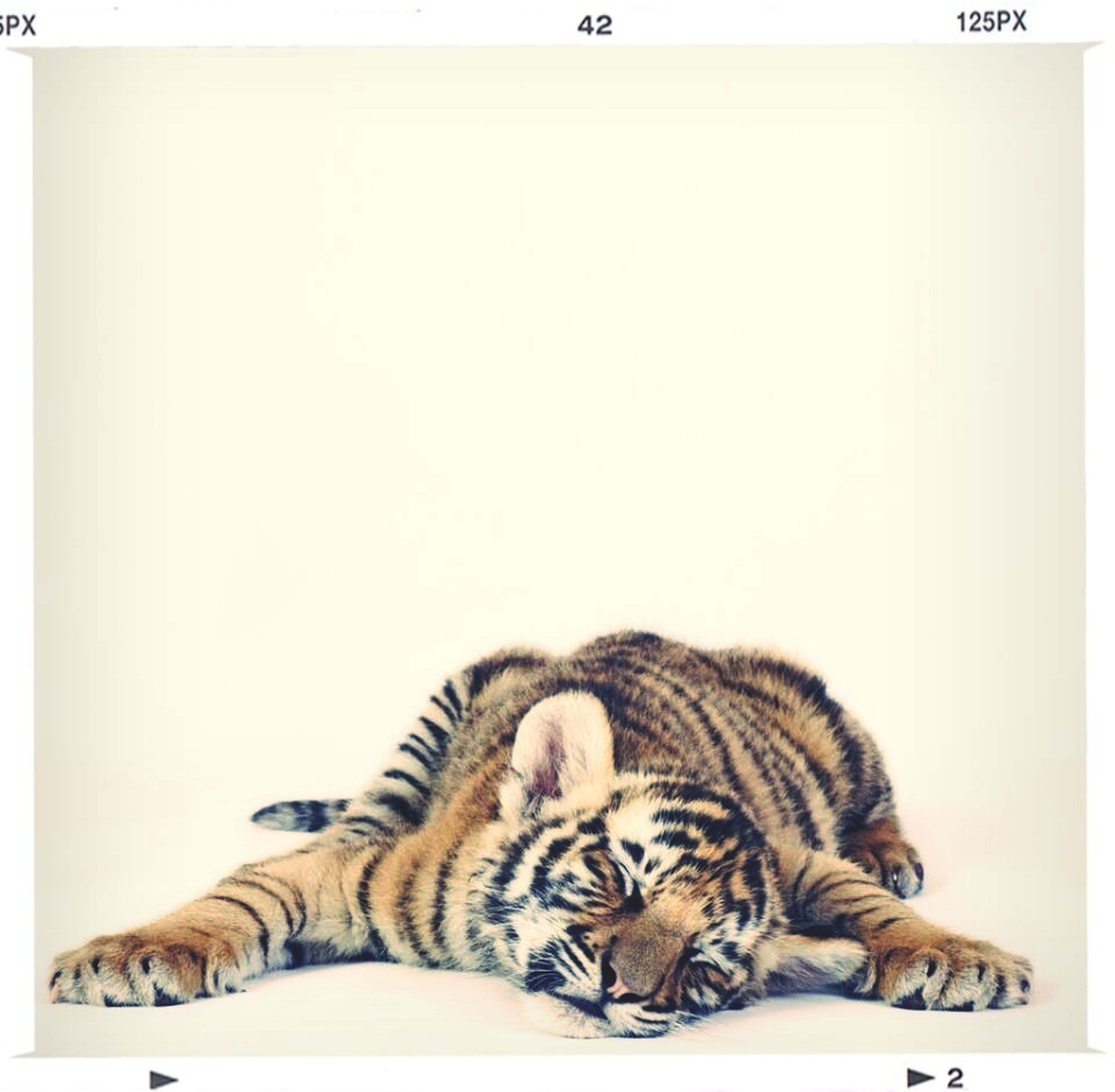 animal themes, one animal, mammal, pets, copy space, relaxation, domestic animals, indoors, domestic cat, cat, lying down, feline, transfer print, resting, auto post production filter, sleeping, sitting, studio shot, white background, wall - building feature