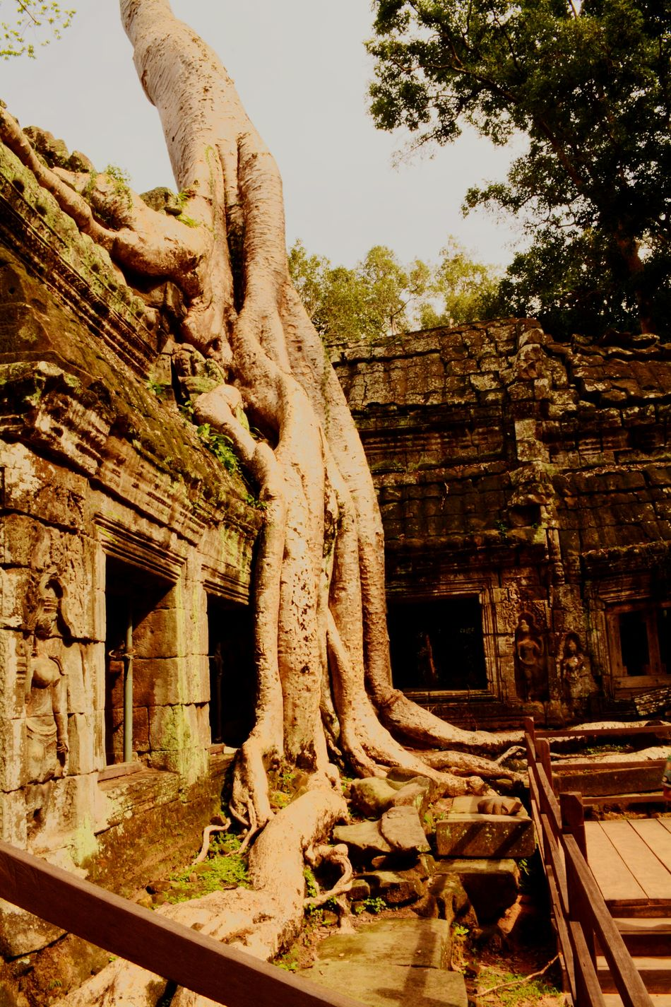 Cambodia Angkor Wat Tombraider Classic Tree Tree Trunk Ancient Ancient Architecture Ruins Historical Building Historic Site Archaeological Heaven Archaeology