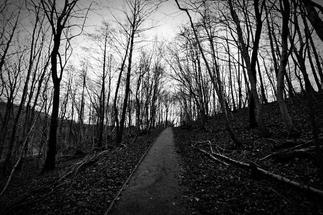 Black And White Path The Dark Side Trees Nature_collection Check This Out Leaves Sky Light And Shadow Through The Trees Photography Photoshop Black & White Rochdale Manchester Queens Park Dramatic