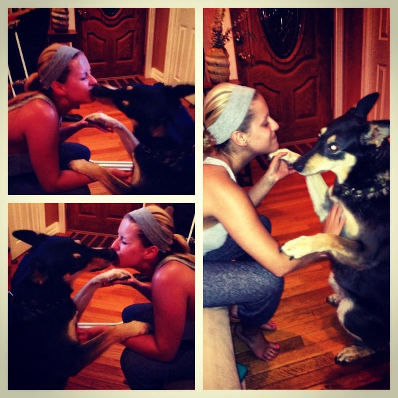 Picstitch  BittyMoose got my eyes my chin my forehead & finally got a picccc! (My mouth's closed by the way for all you perverts that would think I'd tongue my dog) German Shepard Swiss Mountain Dog Moose Bitty .. The only thing that came out of a relationship with a dbaggg cheater ? loveher bigbaby