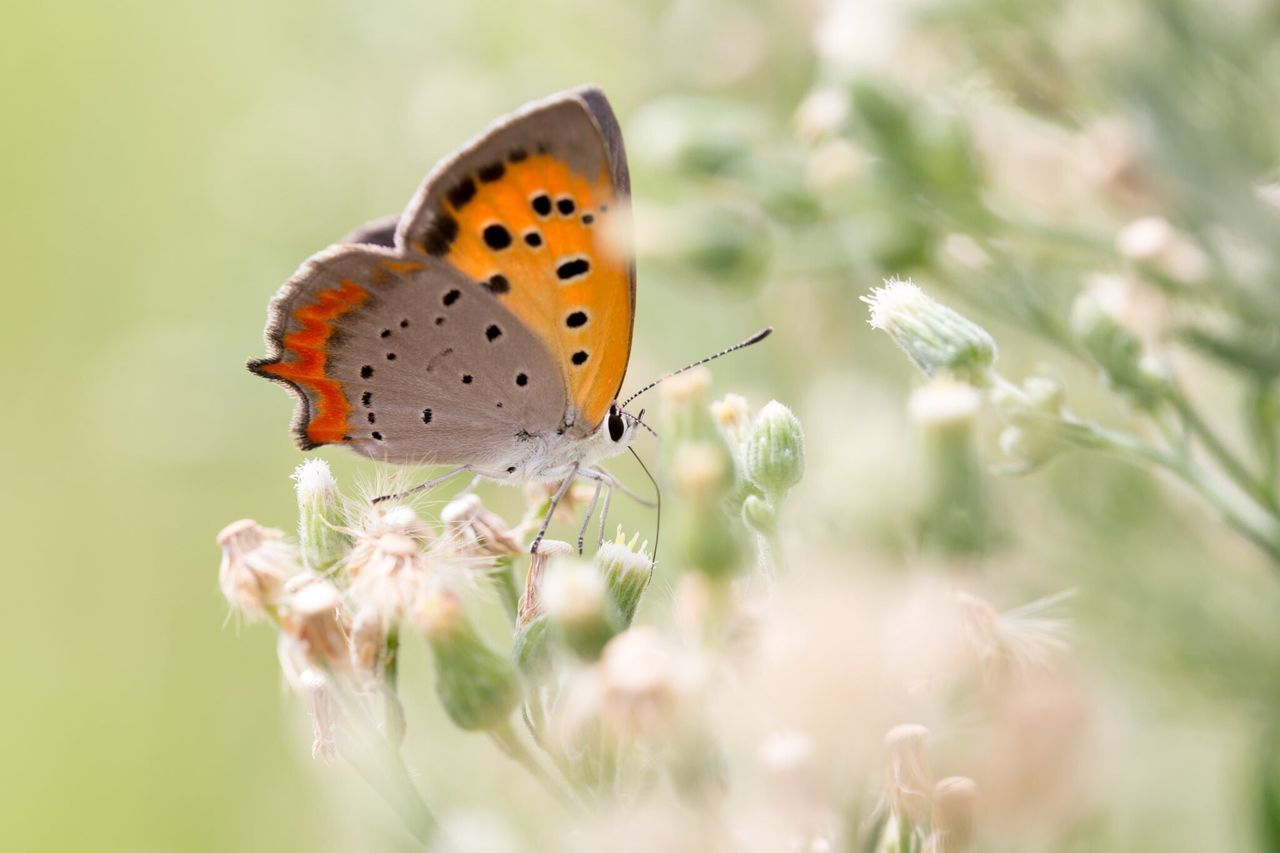 Beautiful stock photos of butterfly, Animal Themes, Animals In The Wild, Butterfly, Day
