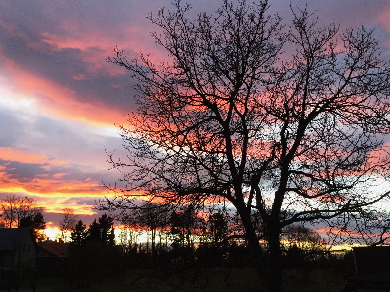 Sunset Beauty In Nature Tree Bare Tree Nature Sky No People Cloud - Sky Tranquility Silhouette Scenics Romantic Sky Outdoors