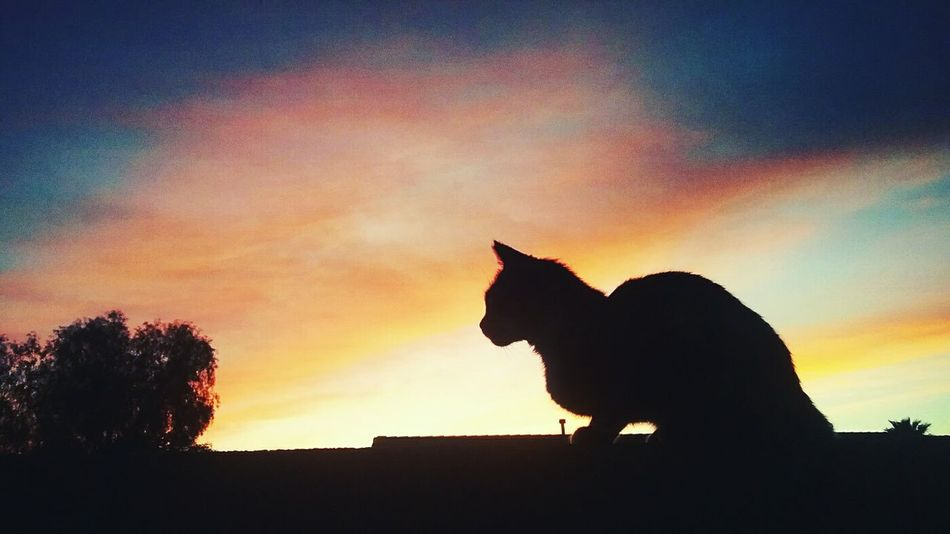 Silhouette Sunset Sky Mammal Nature Outdoors No People Day cat
