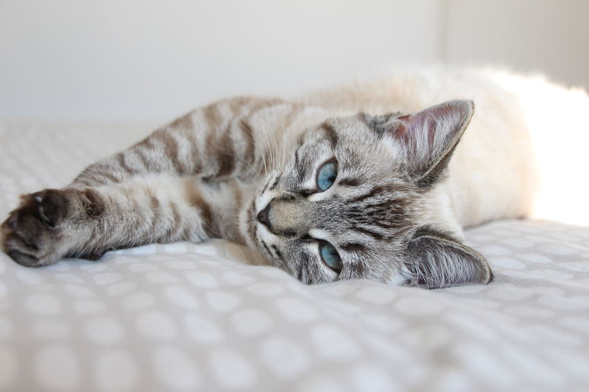 My lovely cat 😻 Blue Eyes Cat Cute Domestic Cat Lovely Pets Photography Tabby Cat