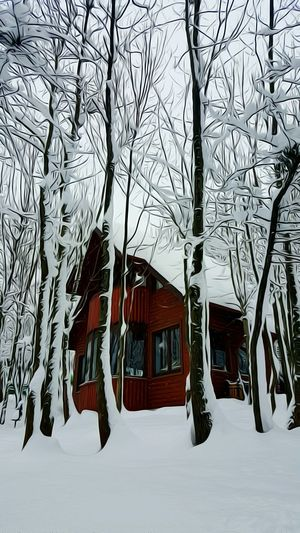 Architecture Tree No People Pattern Saklimedia Backgrounds Eyeemphoto Wild Ice Winter Mountain And Snow Snow Wintertime Outside Day Christmas House