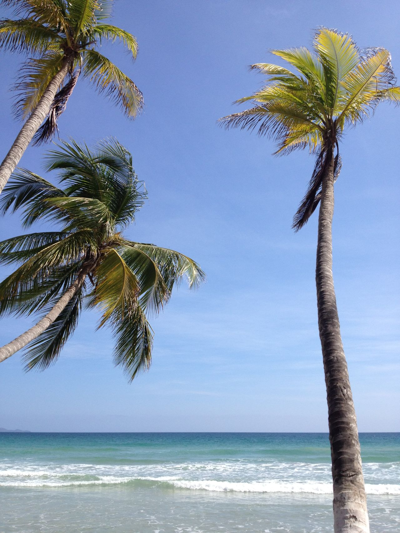 Beautiful stock photos of palm tree, Pampatar, Venezuela, beauty in nature, blue