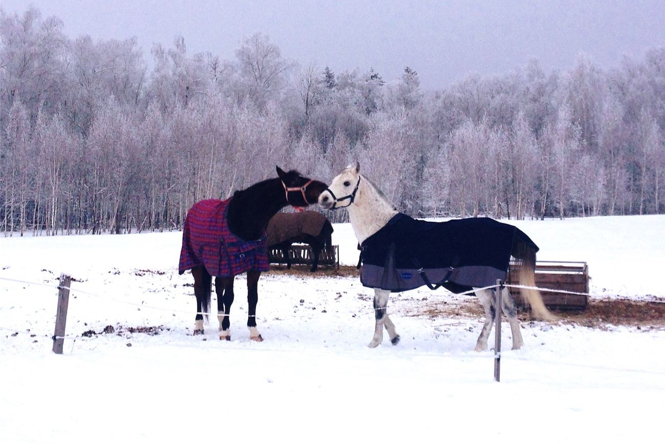 Winter Cold Temperature Snow Animal Themes Horse Weather Tree Mammal Nature Bare Tree White Color Covering Field Working Animal Herbivorous Beauty In Nature Livestock No People Day