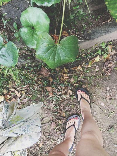 Good bye my summer Travelingfoot