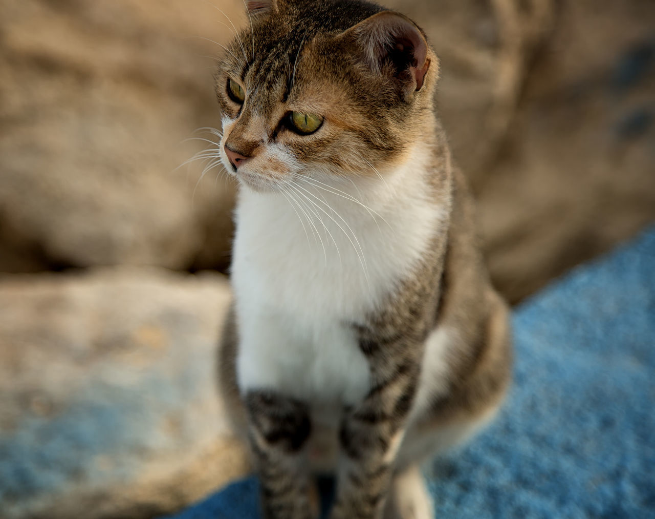 Street Cats Animal Themes Boulder Cats Close-up Coastline Day Domestic Animals Domestic Cat Feline Feline Portraits Mammal Mersin Turkey No People One Animal Outdoors Pets Rock Formation Street Cats