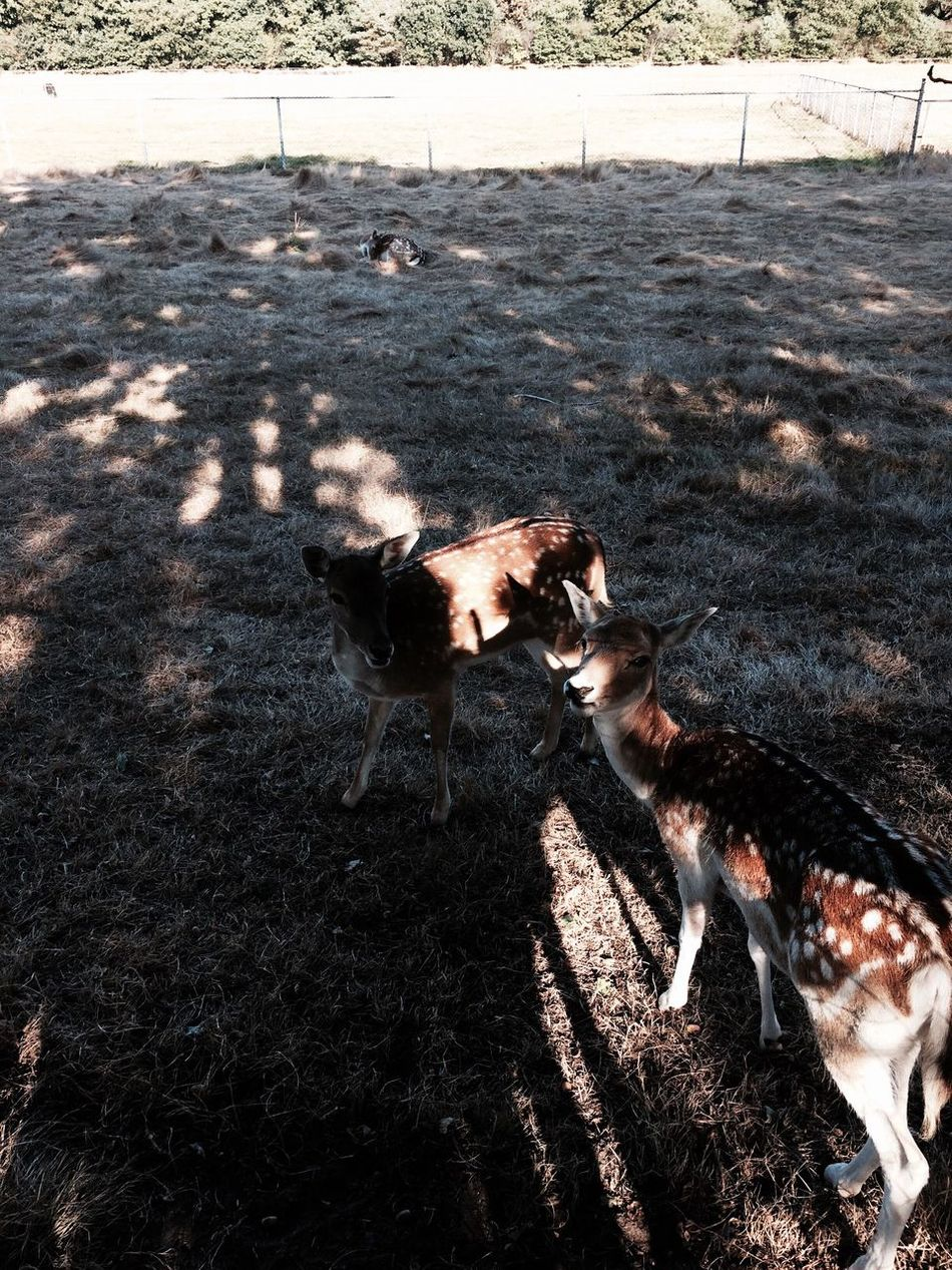 Animal Themes Sunlight Shadow Domestic Animals Day No People Nature Roe Deer