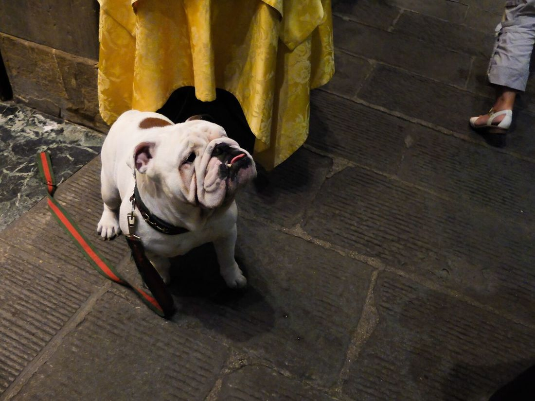 No biggie... Just a bulldog rocking a Gucci leash Dog RePicture Love The Moment - 2014 EyeEm Awards