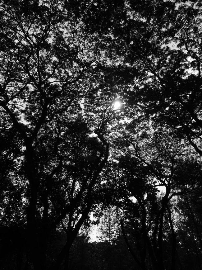 Singapore Sun Trees Light And Shadow Screening Effect Blackandwhite