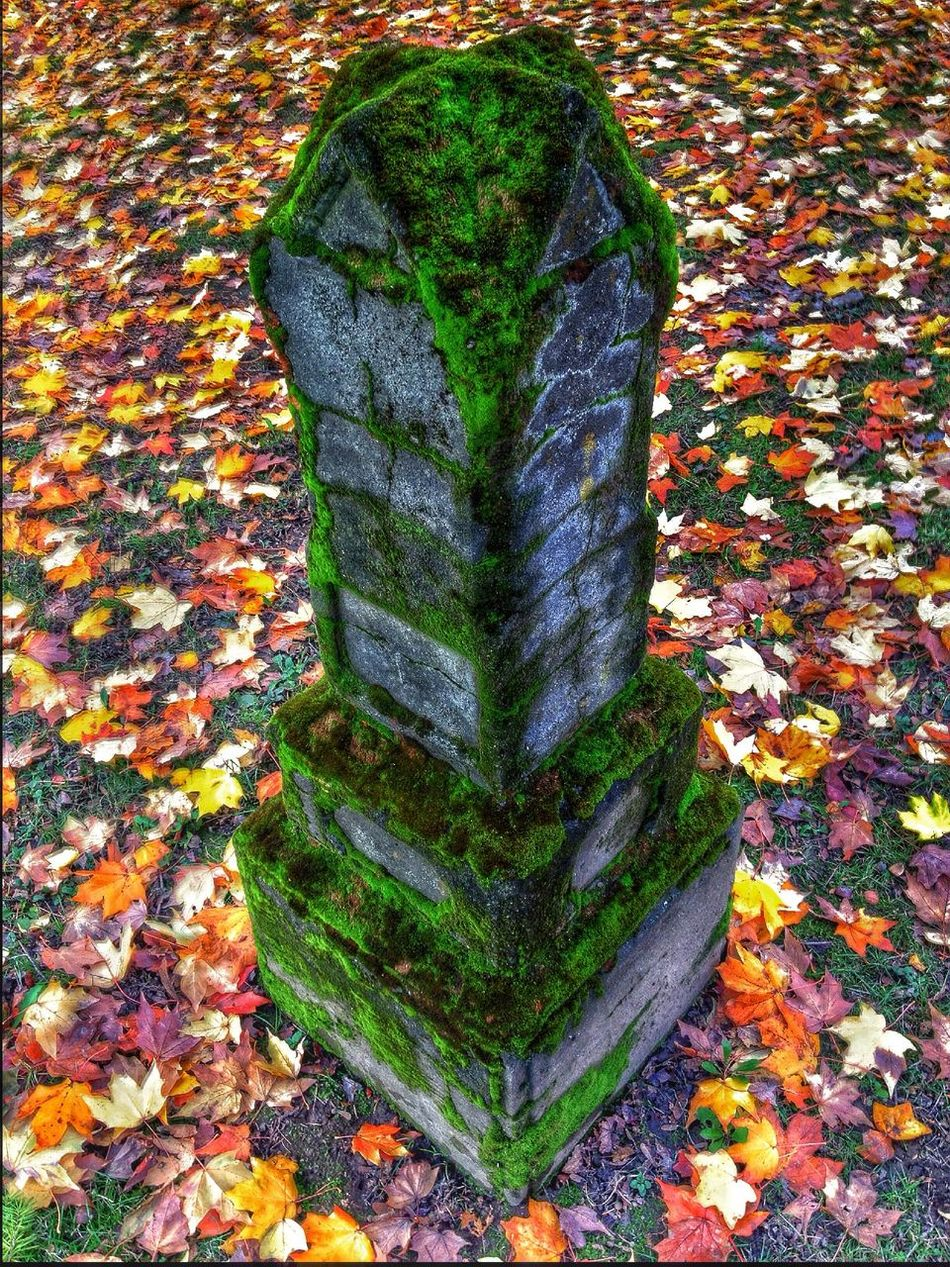 Beautiful stock photos of tombstone, Autumn, Cemetery, Day, Death