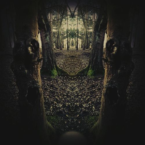 Horror Erotica Twisted Minds The Darkness Within Should I Stay Or Should I Go? Dark Photography Hugging A Tree What Can You See Getting In Touch Walking Around Fear Of The Dark
