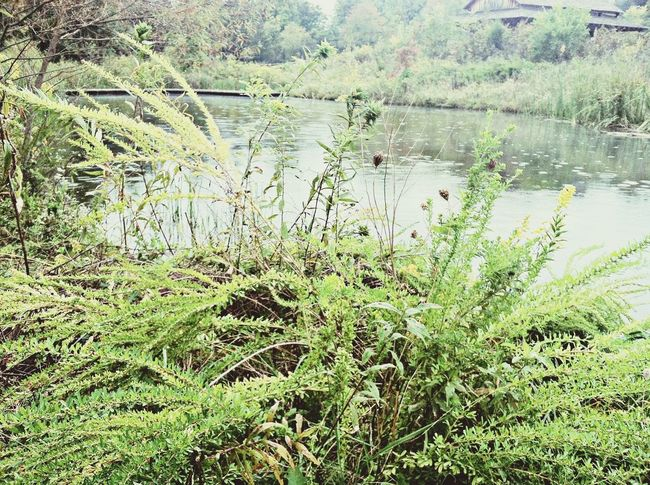 WhetherPro:Your Perfect Whether Shot the rain of the pond on a fall day