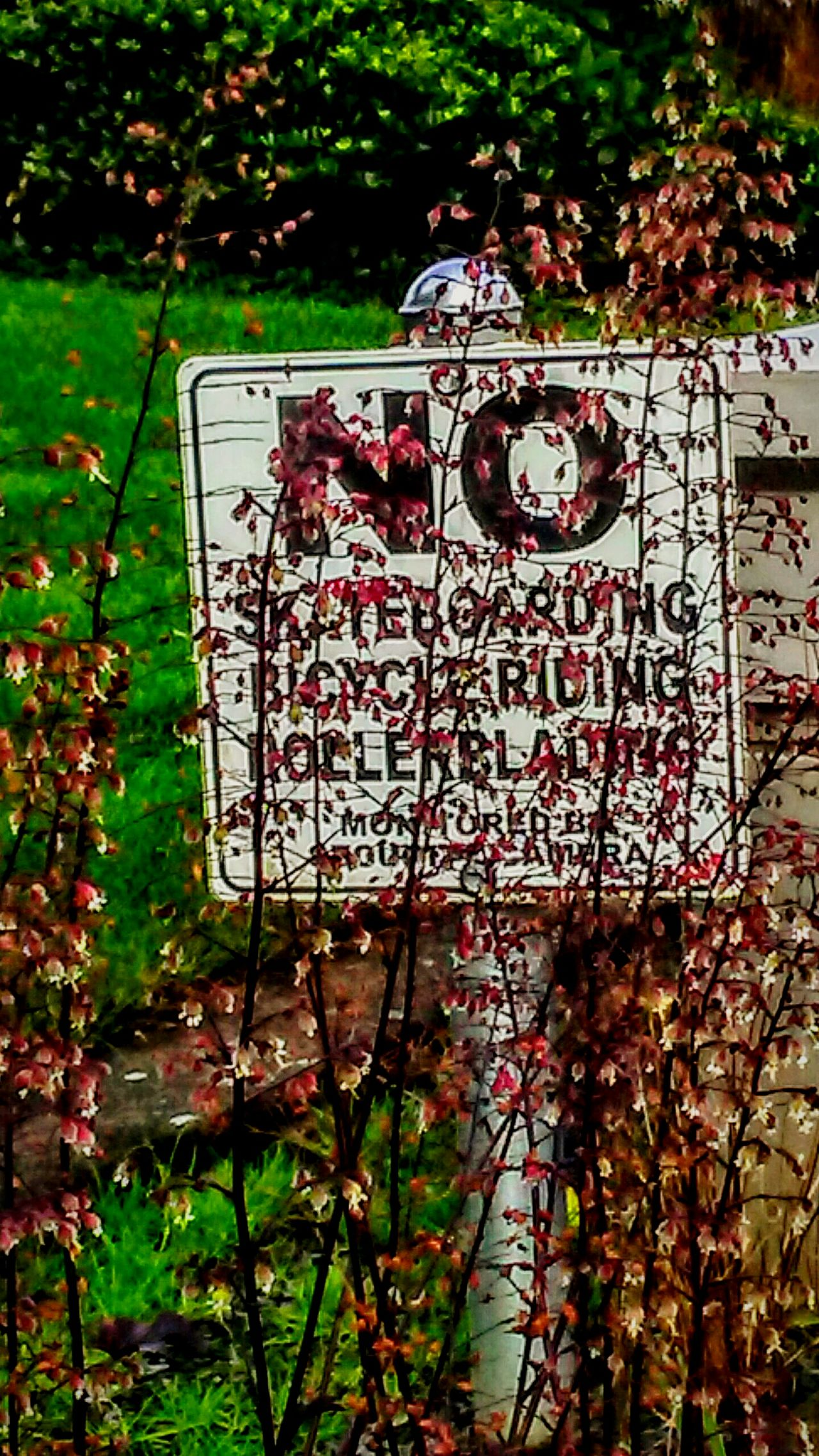 No Skateboarding No This No That! No Bla Bla Signs Signs Collectiom SignSignEverywhereASign Signs Unseen Hidden Flowers, Nature And Beauty Hanging Out Taking Photos EyeEm Hdr-Collection Beauty In Nature Fine Art Photography EyeEm Best Edits Signage Unseen No Fun