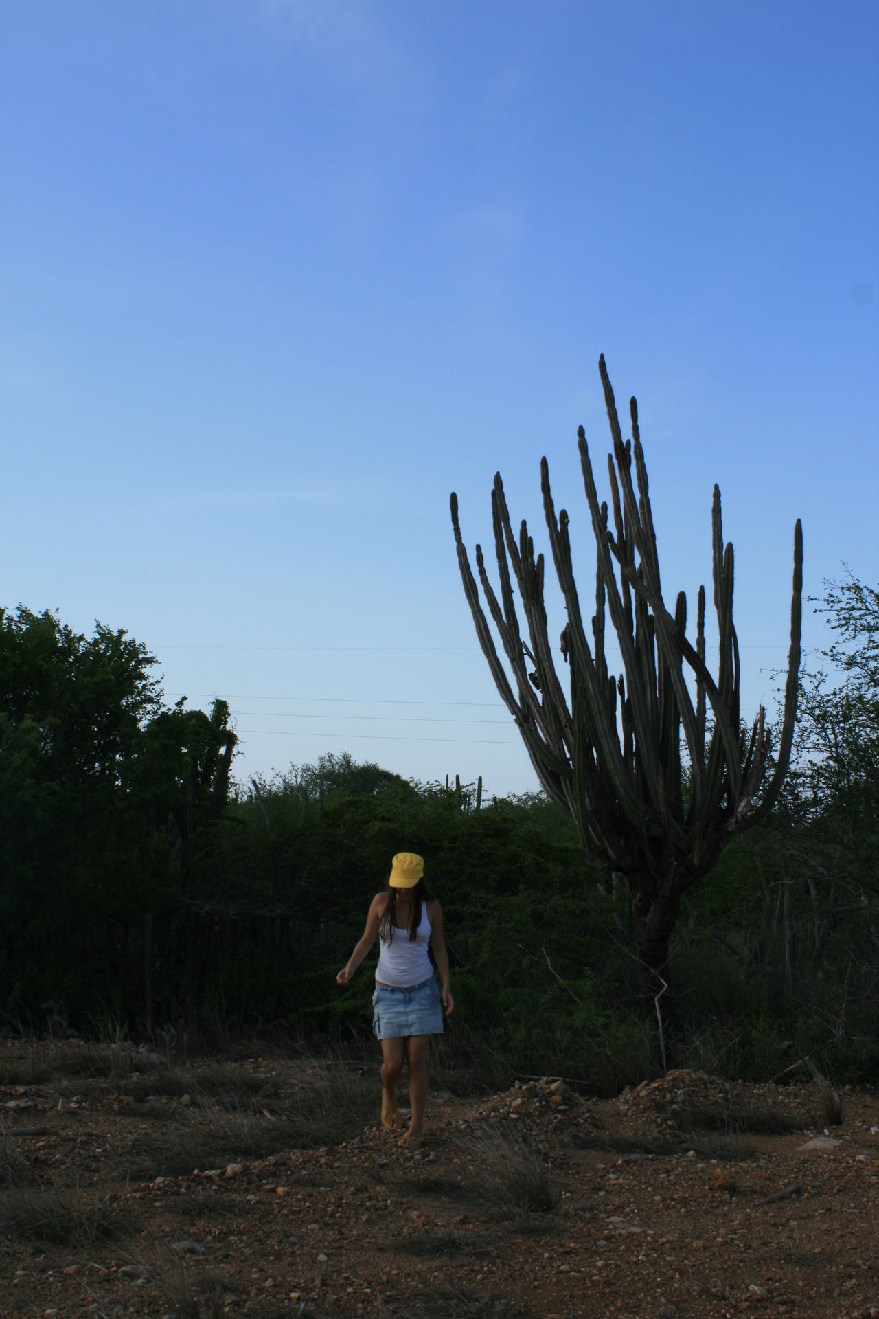 Big Cactus Cactus Casual Clothing Clear Sky Field Full Length Giant Cactus Landscape Leisure Activity Lifestyles Margarita Island Margarita, Venezuela Men Nature Rear View Sky Travel Travel Photography Traveling Hat