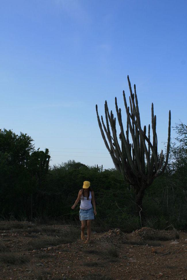 Big Cactus Cactus Casual Clothing Clear Sky Field Full Length Giant Cactus Landscape Leisure Activity Lifestyles Margarita Island Margarita, Venezuela Men Nature Rear View Sky Travel Travel Photography Traveling Hat