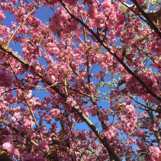 Spring Into Spring Croixrousse Only Lyon Eyelyon Lyon Spring Flowers Frühling Printemps Cerisier