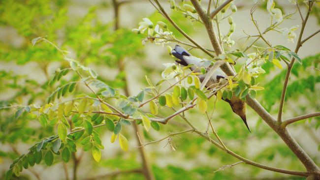 Hummingbird My Perspective From My Point Of View Beautiful Birds Birds🐦⛅ Humming Birds Hummingbirds Flowers Beautiful Nature Beauty In Nature Bird On A Tree Nature Photography Bird On A Branch Hello World Check This Out Taking Photos EyeEm Masterclass EyeEm Gallery EyeEm Best Shots India ASIA The Great Outdoors - 2016 EyeEm Awards