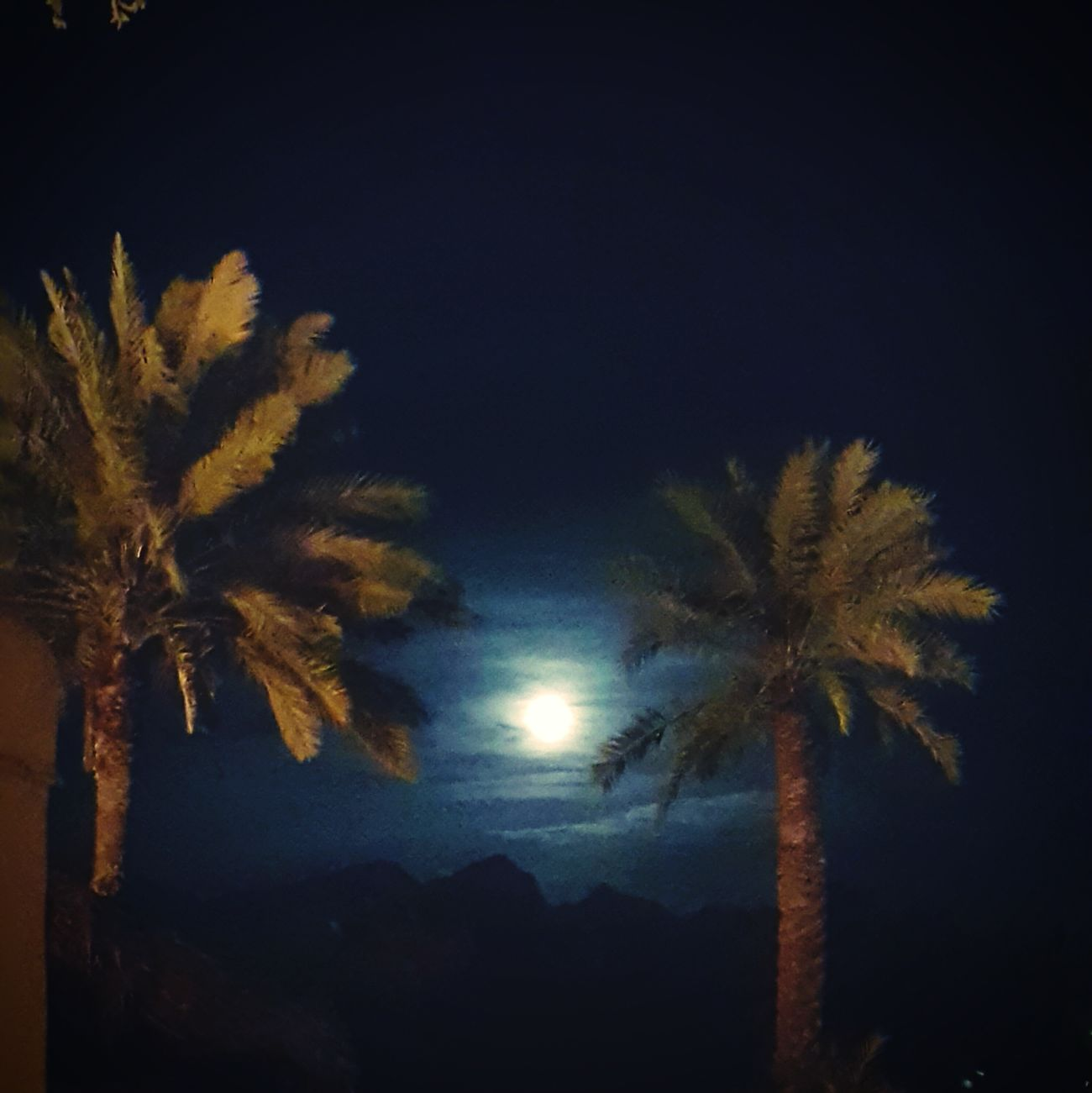 Night Palmtree Dubai Hatta Dubai Moon Moonlight Moon Light The Moon Beautiful Moon  Moonshine