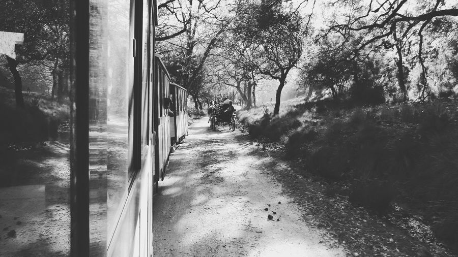 Tree Window Transparent Reflection Mode Of Transport Day Transportation Land Vehicle Vehicle Interior One Person Nature Sky Outdoors People Chariot Monochrome Photography Black And White Looking Through The Window Looking Through Looking Through Window Train In Park Park Travel Lifestyles The Great Outdoors - 2017 EyeEm Awards BYOPaper! Live For The Story