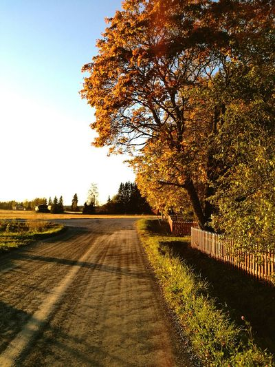 Clear Sky Tree Tranquil Scene Road The Way Forward Tranquility Landscape Scenics Transportation Grass Blue Empty Road Travel Destinations Growth Solitude Day Outdoors Nature Non-urban Scene Long