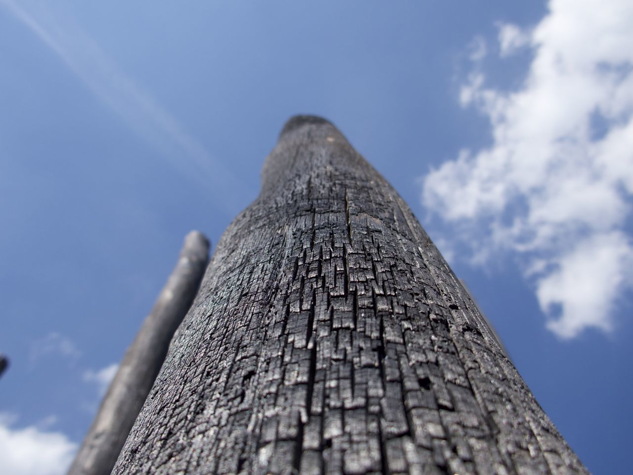 After The Fire Burnt Wood Charcoal Close-up Cloud - Sky Day Low Angle View Nature No People Outdoors Rough Sky Textured  Tree Trunk Wood - Material
