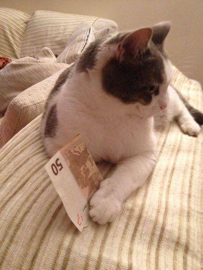 Kitty Thecat Pizzo Mafia  I'mtheboss