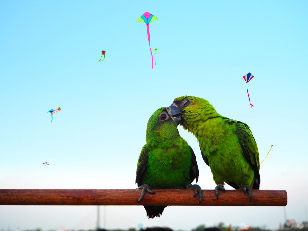 💚The lover💚 Summer Animals Bird Blue Sky Capture The Moment Bangkok Day Exceptional Photographs Spotted In Thailand Kite Love Low Angle View Multi Colored Parrot Perching Recreational Pursuit Tadaa Community Thailand Travel Traveling Wildlife The Great Outdoors - 2016 EyeEm Awards Colour Of Life The City Light Sommergefühle
