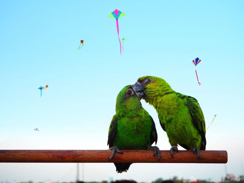 Beautiful stock photos of bangkok, Animal Themes, Animal Wildlife, Animals In The Wild, Bird
