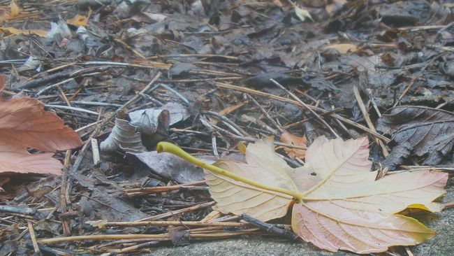 Rising and falling Fall Beauty Melancholy Autumn Colors Fresh 3