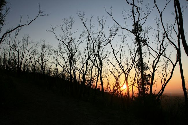 Sunset_collection Trees After The Fires