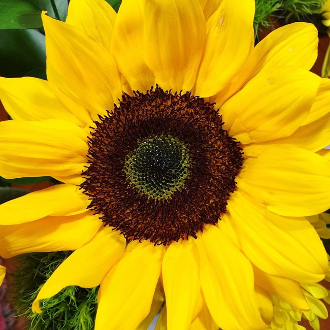 Have a great week! 🌻 Flower Freshness Yellow Petal Fragility Flower Head Close-up Beauty In Nature Nature Sunflower Growth Single Flower In Bloom Vibrant Color Plant Botany Blossom Still Life