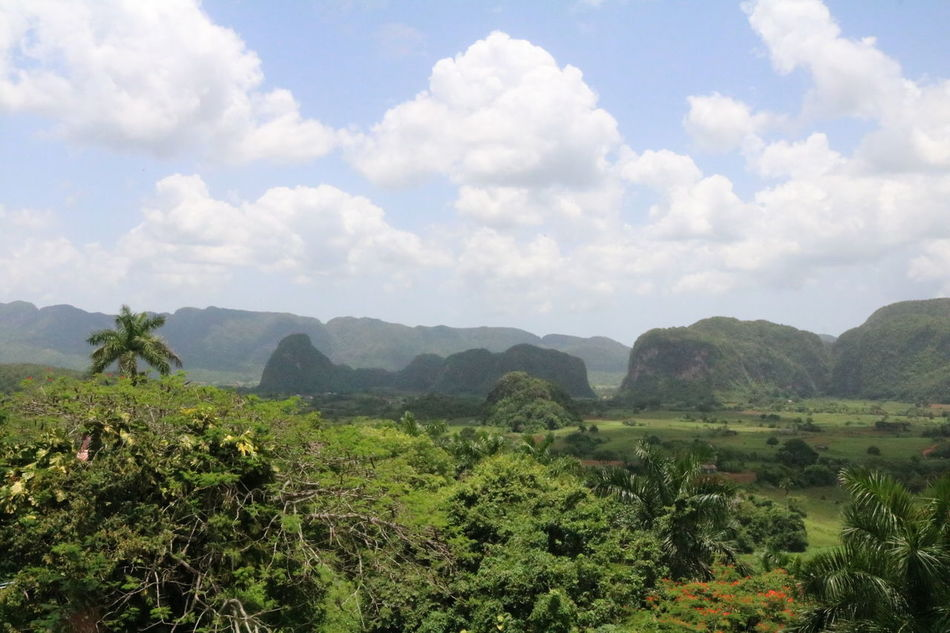 Cuba, Vinales Valley Arial View Beauty In Nature Cloud - Sky Cuba Day Forrest Green Color Growth Landscape Lush Foliage Mountain Mountain Range Nature No People Outdoors Palms Scenics Sky Tea Crop Tranquil Scene Tranquility Tree Viñales
