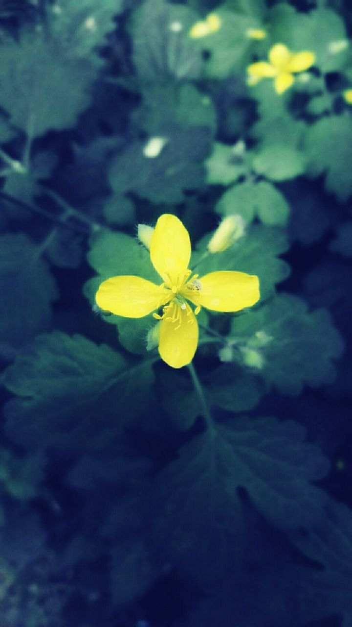 flower, yellow, fragility, beauty in nature, petal, growth, freshness, nature, flower head, day, outdoors, plant, leaf, no people, green color, close-up, blooming