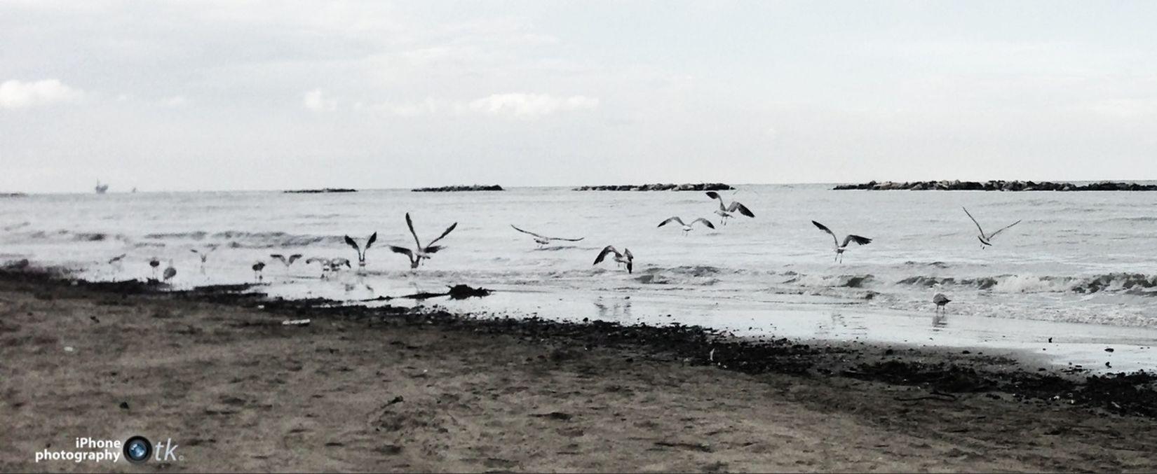Sea Beach Seagulls Don't Be Square