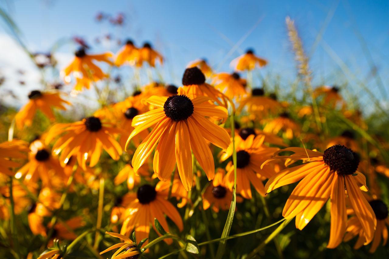 21mm Canonphotography Flower Piedmont Summer Sun Vertical Zeiss