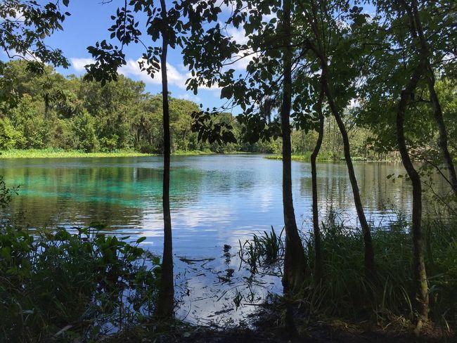 Beautiful Silver Springs Silver Springs State Park Silver Springs Florida Florida Nature Beauty In Nature Tranquil Scene Florida Park Spring Water