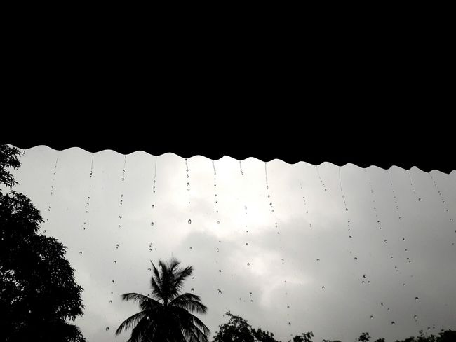 Raining Pearls...... EyeEm Nature Lover Raindrops PhonePhotography Enjoying Life