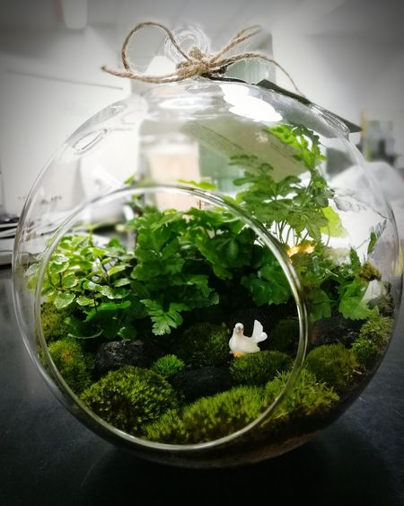 Taking Photos Relaxing Enjoying Life Plant Hello World Decorative Nice Photography Growth Traveling Growing Goog Times Decoration Green Planting Plants And Flowers Plants Terrarium Glass Travel Outdoors Garden Small Garden Hello World Nightphotography Green Color