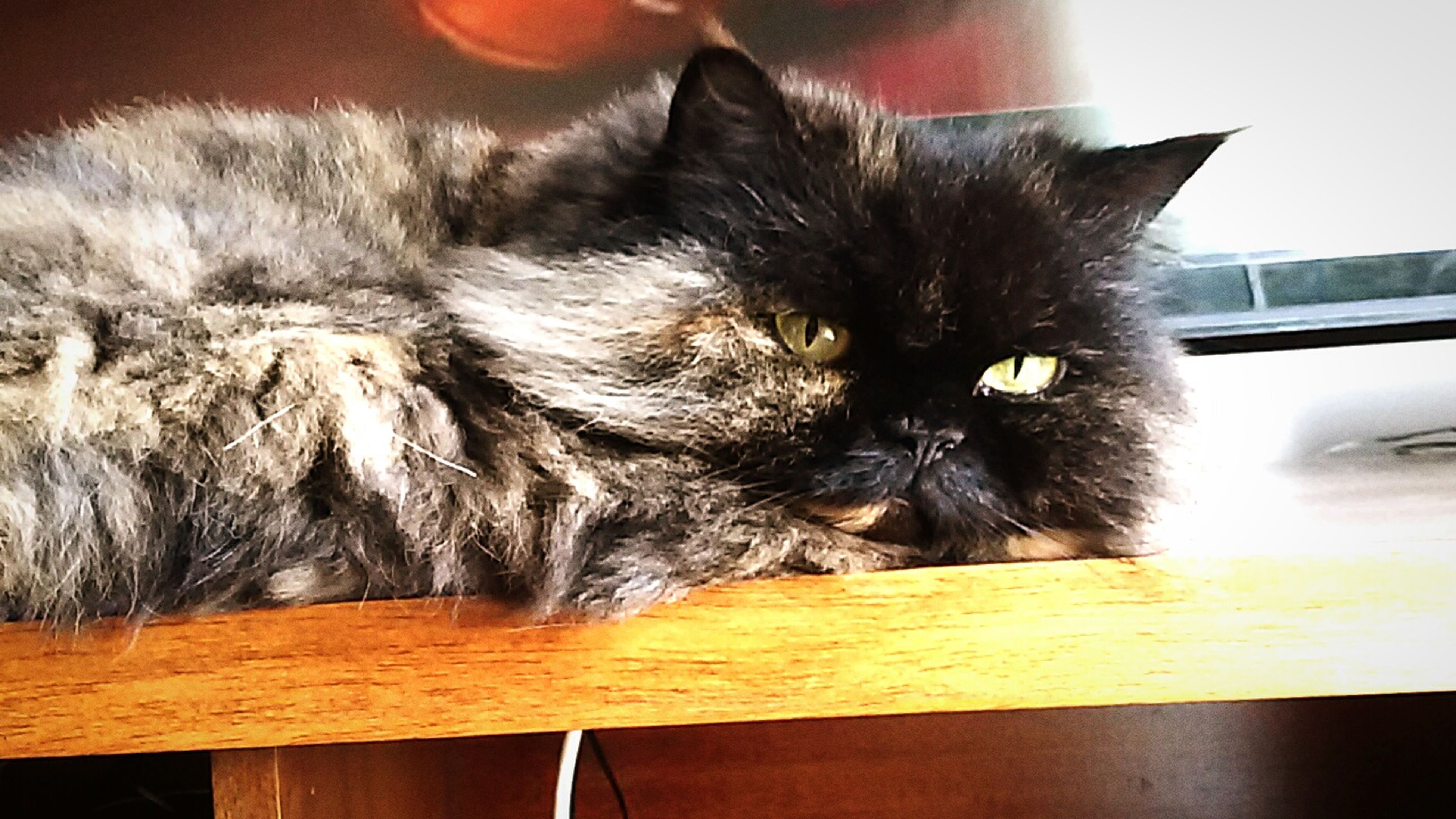 indoors, domestic cat, pets, domestic animals, cat, one animal, animal themes, feline, mammal, home interior, whisker, table, close-up, relaxation, home, animal head, no people, wood - material, looking away, resting