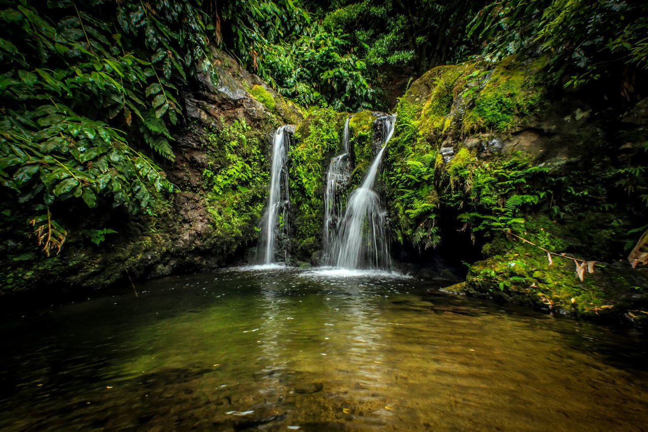waterfall, scenics, motion, water, no people, beauty in nature, nature, outdoors, forest, plant, day