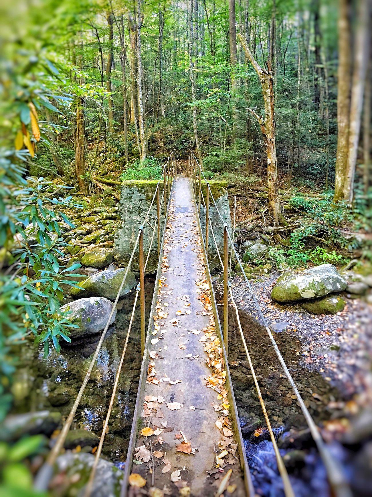 Walk Through The Woods Walkway Bridge