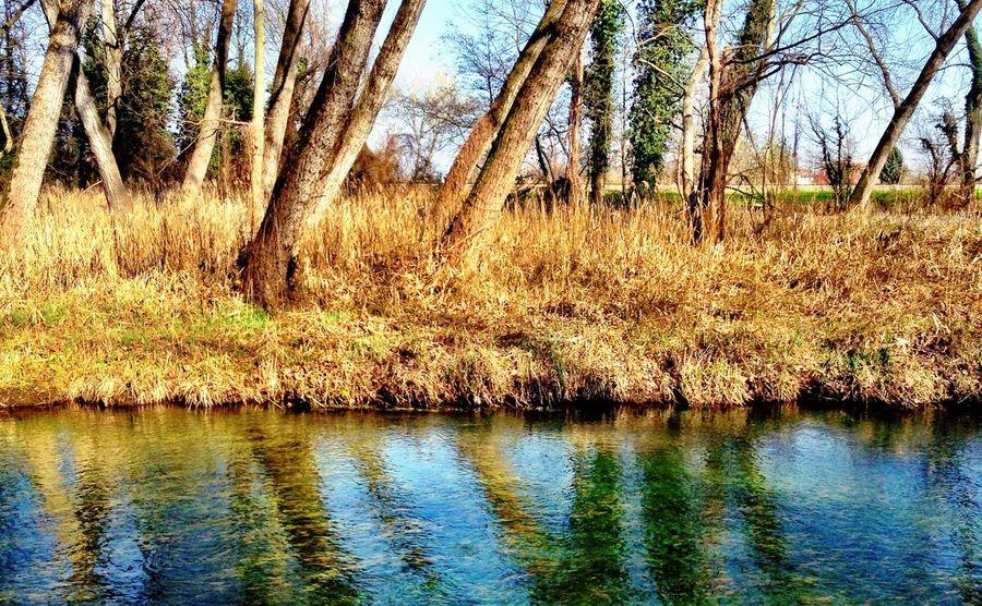 Nature Stripes Trees River
