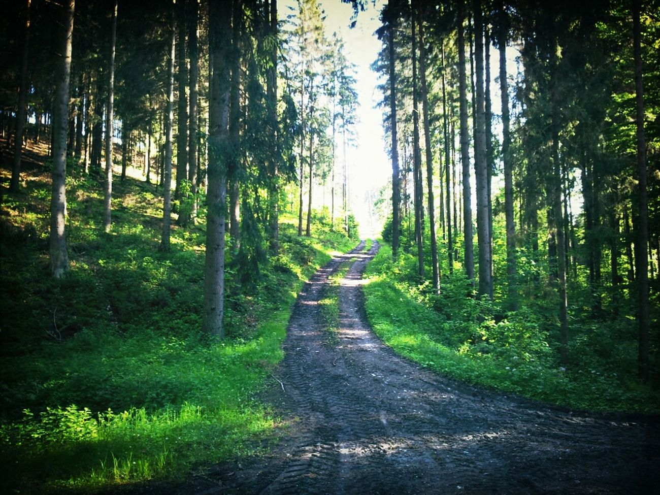 Wald Trees Enduro EyeEm Nature Lover