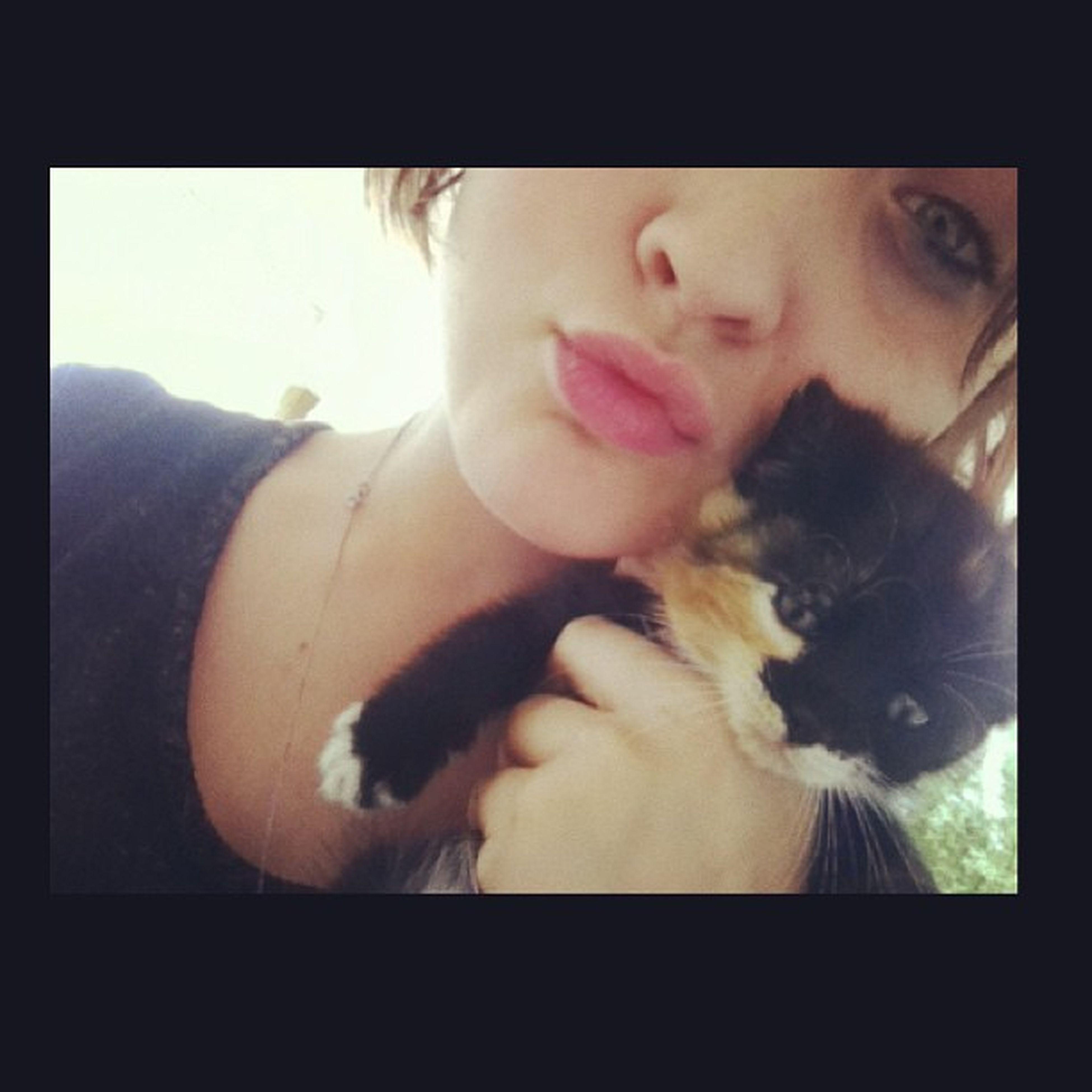 Bffs4lyfe Kitten Mewmew Socute