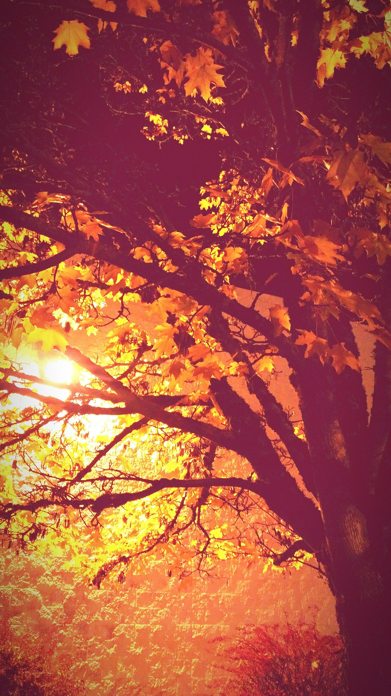 Tree Sunlight Nature Beauty In Nature Branch Sunset Outdoors Close-up Autumn Tree Transportation City Autumn 2016 Travel Photography Tranquility Happiness Scenics Memorable Moment